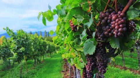 Weinstock und Reben - Wie kann man eine gute Beziehung zu Gott haben?
