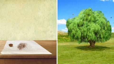 Biblische Geschichte | Das Gleichnis vom Senfkorn