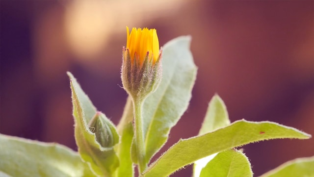 Erleuchtung durch zwei Blumenkörbe