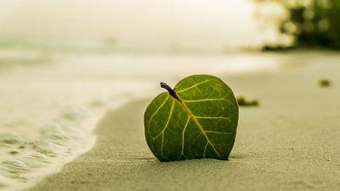 Gottes Erlösung-Ich habe den Krebs besiegt, indem ich mich auf Gott verlassen habe.