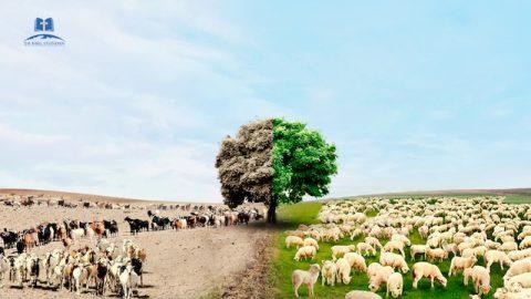 Biblische Prophezeiungen | Unterscheidet zwischen Kraut und Unkraut, Ziegen und Schafen