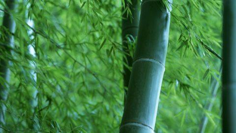 Eine Bambusstange und eine Bambusflöte