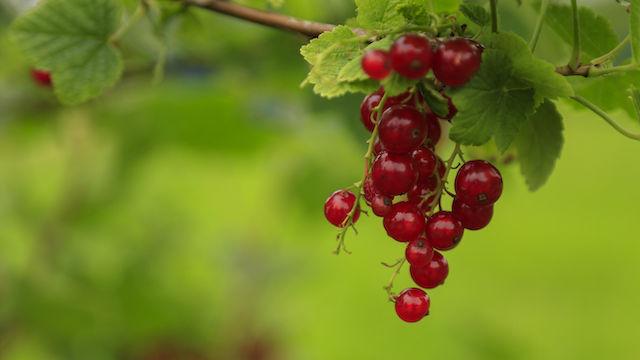 An ihren Früchten sollt ihr sie erkennen