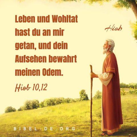 Hiob Bibel