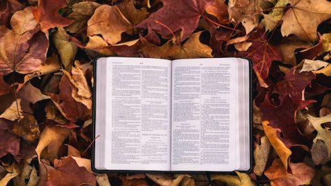 Kann Gottes Werk nicht über die Bibel hinausgehen?