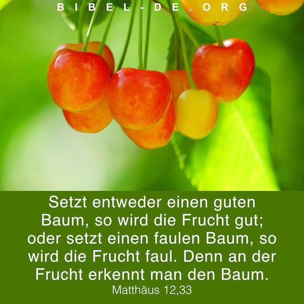 Grüne Blätter und Kirschen