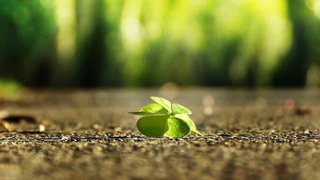 Grüne Blätter fallen auf den Boden