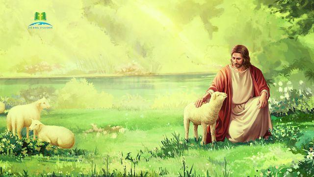 Herr Jesus und Lamm