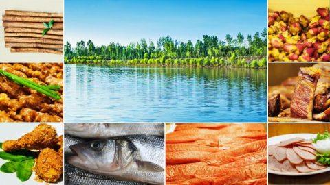Die Fleischsorten, die Wasserquellen und die Arzneipflanzen, die Gott für die Menschheit bereitstellt